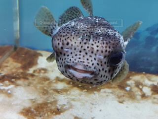 魚のクローズアップの写真・画像素材[4308669]