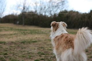 走りたい犬の写真・画像素材[2702357]