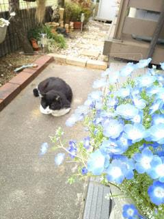庭に横たわっている猫の写真・画像素材[2706979]