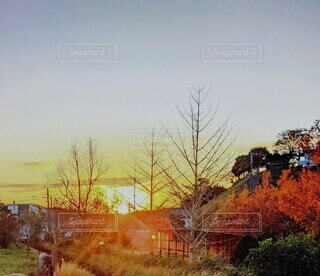 自然,風景,空,屋外,朝日,朝焼け,樹木,正月,お正月,日の出,初日の出,草木,寒い朝