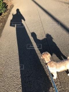 仲良くお散歩の写真・画像素材[2705706]