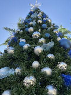 クリスマスツリーの写真・画像素材[2849009]