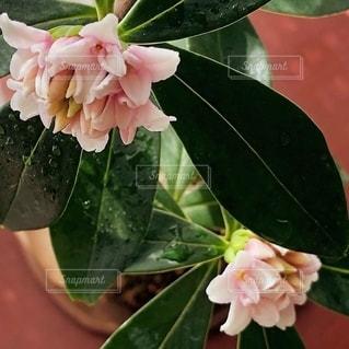 花をクローズアップするの写真・画像素材[2722910]
