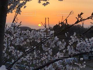 故郷の春の写真・画像素材[2899388]
