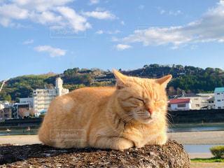 鏡川の土手で気持ちよく昼寝するにゃんこの写真・画像素材[2984883]