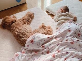 ある日のお昼寝の写真・画像素材[2708304]