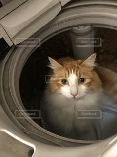 家族,友だち,猫,動物,ペット,人物,洗濯機,ノルウェージャンフォレストキャット,ネコ,白物家電