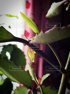 幸せの葉っぱの写真・画像素材[2722839]