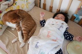 赤ちゃんと猫の写真・画像素材[2721081]