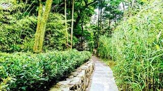 自然,風景,森林,屋外,緑,散歩,景色,観光,樹木,庭園,竹,石畳,新緑,旅行,回廊,竹林,美術館,石,ドライブ,草木,根津美術館