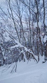 アウトドア,冬,スポーツ,雪,樹木,人物,ゲレンデ,レジャー,シュプール