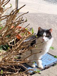 猫,動物,屋外,白,黒,ペット,人物,外,草木,ネコ