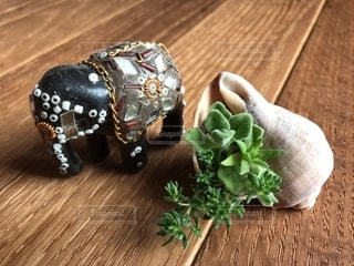 貝と多肉植物と象の写真・画像素材[2778449]