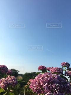 空,爽やか,紫陽花,初夏