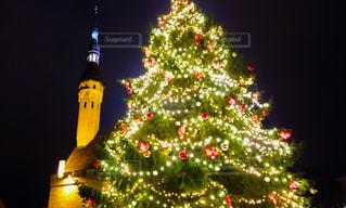 エストニアのクリスマスツリーの写真・画像素材[2853600]