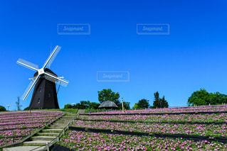 青空とペチュニアと風車の写真・画像素材[3298217]