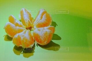 みかんの軌跡〜その4〜の写真・画像素材[3894873]