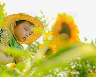 ひまわり畑にての写真・画像素材[4691730]