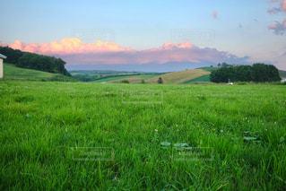 近くに緑豊かな緑のフィールドのの写真・画像素材[897828]