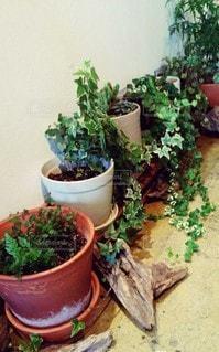 植物のクローズアップの写真・画像素材[2732647]