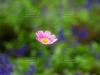 花をクローズアップするの写真・画像素材[2824047]
