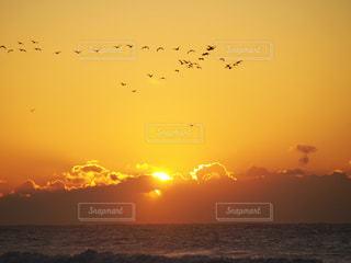 自然,空,鳥,太陽,水面,海岸,光,日の出,群れ