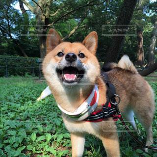 犬 - No.123871