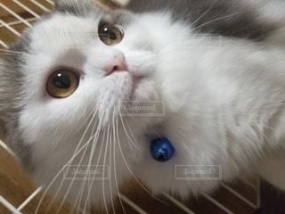 横顔イケメンの写真・画像素材[2742919]