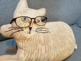 猫,ファッション,動物,アクセサリー,リビング,屋内,眼鏡,クッション,ソファー,メガネ