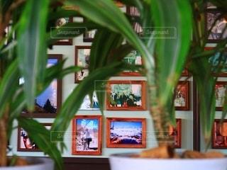 観葉植物とフォトフレームの写真・画像素材[2746618]