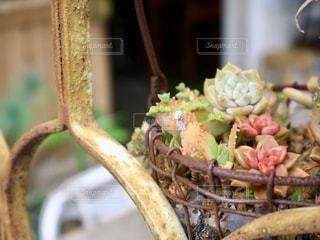 多肉植物の寄せ植えの写真・画像素材[2758350]