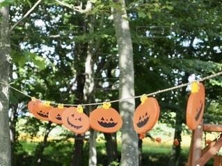 オレンジの木の看板の写真・画像素材[2764830]
