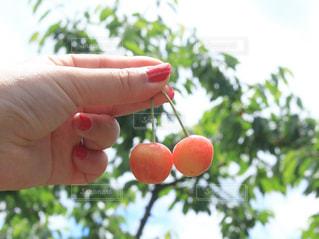果物を持つ手の写真・画像素材[2887290]