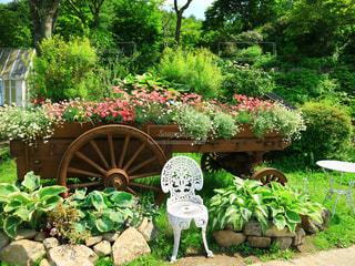 庭の緑の植物の写真・画像素材[3030548]