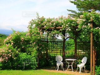 庭のベンチの写真・画像素材[3030547]