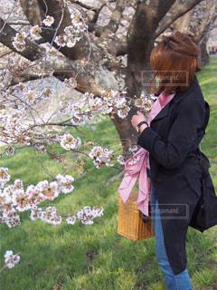 女性,風景,花,春,桜,屋外,散歩,満開,人,桜の木