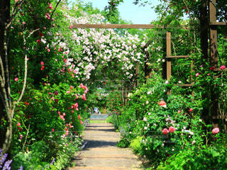 薔薇の花園の写真・画像素材[3345143]