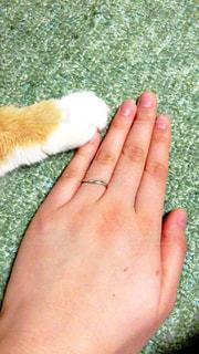 女性,家族,猫,動物,ペット,人物,ネコ
