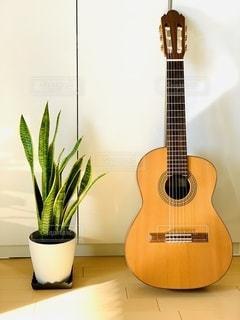 植物とギターの写真・画像素材[2745997]