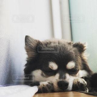 犬の写真・画像素材[3420901]