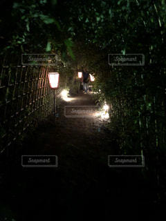 向島百花園 月見会 ぼんぼりと萩のトンネル。江戸時代の夜景色の写真・画像素材[2744297]