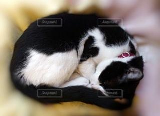 猫,動物,白黒,ペット,ハート,幸せ,お昼寝,ぬくもり,ネコ