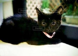 猫,動物,屋内,黒,ペット,子猫,座る,キティ,ネコ