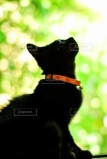 猫,動物,緑,黒,見上げる,ペット,子猫,座る,見つめる,ネコ