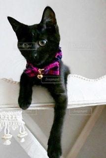 猫,動物,黒,ペット,鈴,子猫,リボン,キティ,ネコ,エレガント