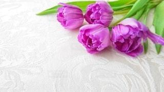 花のクローズアップの写真・画像素材[2984615]