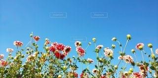 花のクローズアップの写真・画像素材[2984647]