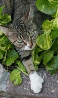 緑の植物の上に座っている猫の写真・画像素材[2990087]