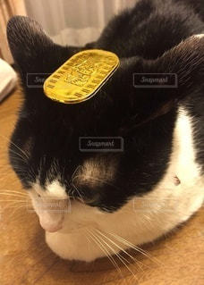机の上に横たわる猫の写真・画像素材[2994302]