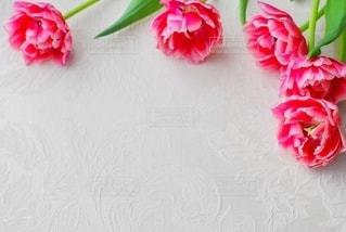 テーブルの上にピンクの花の写真・画像素材[3020228]